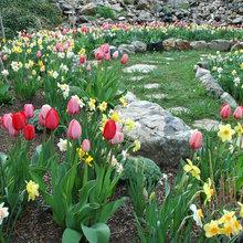 Springtime Inspiration