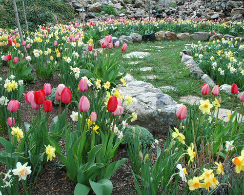 Spring Bulb Garden Home Design Ideas Pictures Remodel