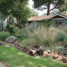 Contemporary Landscape by Eve's Garden Design