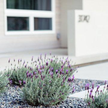 native california plants / low-maintenance landscape detail