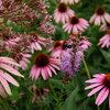 Great Lakes Gardener