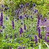 10 genialiska trädgårdsidéer från experterna