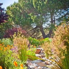 Mediterranean Landscape by Sage Ecological Landscapes and Nursery