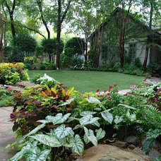 Tropical Landscape by Original Landscape Concepts Inc