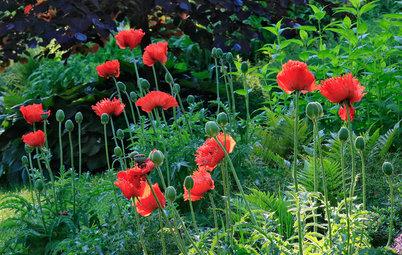 7 Garten-Ideen, die im Juni Freude machen
