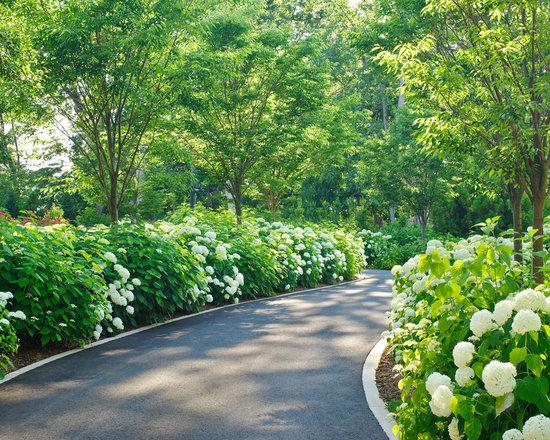 Driveway Landscaping Ideas Houzz