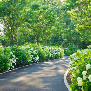 Photo of a classic driveway fully shaded garden in DC Metro.