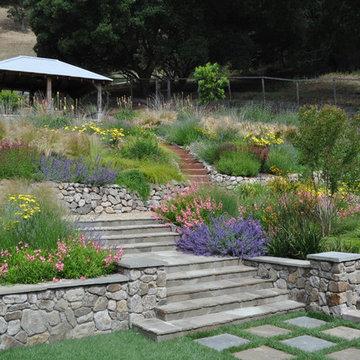 Northern California regional hillside