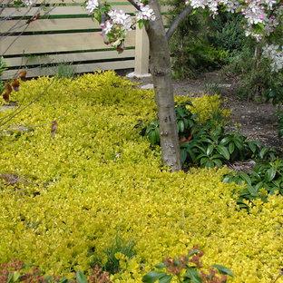 Inredning av en modern liten trädgård i skuggan som tål torka och framför huset på hösten, med en trädgårdsgång och marktäckning