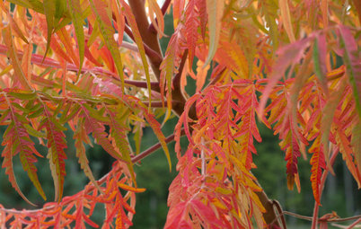 Pacific Northwest Gardener's November Checklist