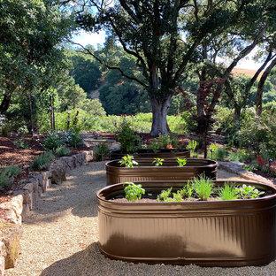 Geräumiger, Halbschattiger Moderner Kiesgarten im Sommer, neben dem Haus in San Francisco
