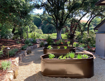 Oak Tree Setting With Hillside Views, Landscape Renovation, Northern California