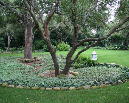 Dry Shade Ground Cover Home Design Ideas Pictures