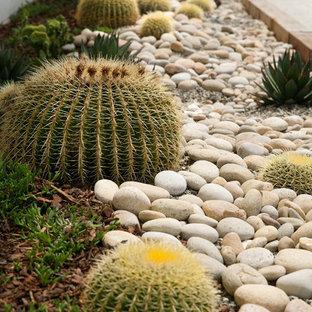 サンタバーバラのコンテンポラリースタイルのおしゃれな庭 (ゼリスケープ、日向、マルチング舗装) の写真