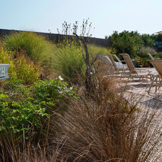 Beach Style Landscape by Groundswell Design Group, LLC