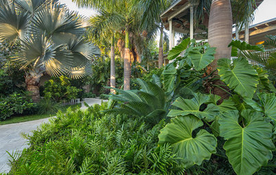 10 Great Shade-Loving Plants for Subtropical Gardens