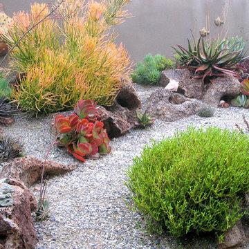 Ocean Inspired Succulent Garden