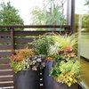 Как правильно: Горшечный сад осенью — проводим апгрейд