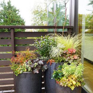 Foto di un giardino contemporaneo dietro casa in inverno con un giardino in vaso