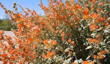 Warm Up Your Garden With Orange Flowers