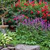 Great Design Plant: Stachys Officinalis 'Hummelo'