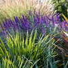 8 Plant Pairings for High-Impact Color in the Fall Garden