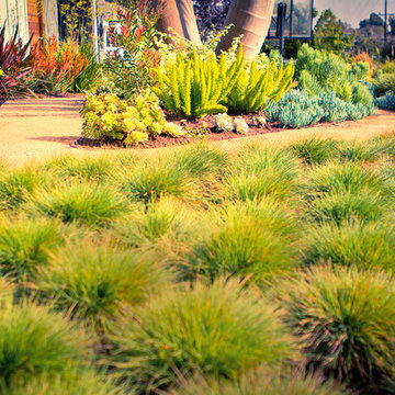 Ornamental grasses in foreground, low water plants and paths in background