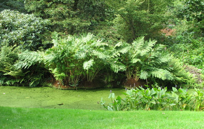 Great Design Plant: Osmunda Regalis