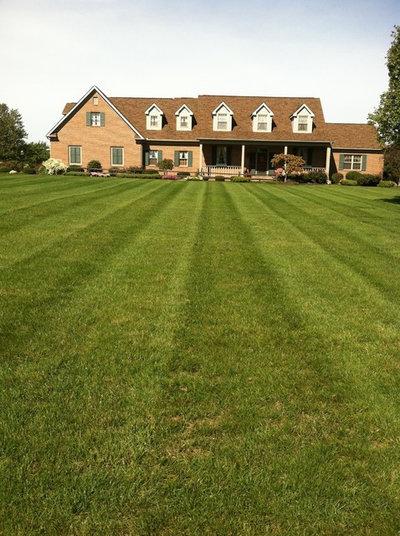 How To Fix Yellow Grass Houzz