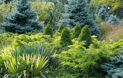 Designing With Conifers: Layers of Texture for Your Garden