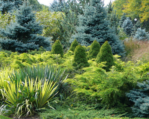 Weeping white spruce houzz for Garden designs for zone 4
