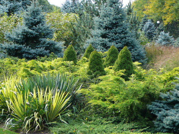 Designing With Conifers: Layers of Texture for Your Garden on