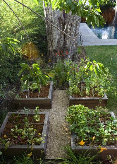 コンテンポラリー 庭 by Shades Of Green Landscape Architecture