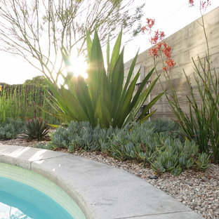 Photo of a modern drought-tolerant and partial sun backyard gravel landscaping in Los Angeles.