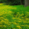 5 Native Early-Spring Bloomers to Plant This Fall