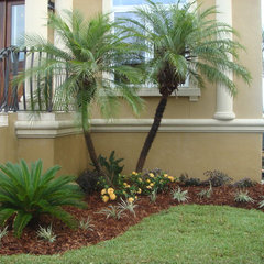 tropical landscape by Palm Garden Depot