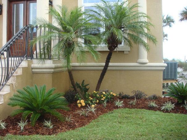 Tropical Landscape by Palm Garden Depot