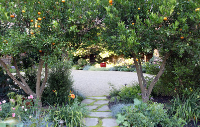 How You Can Rejuvenate Your Citrus Trees This Winter