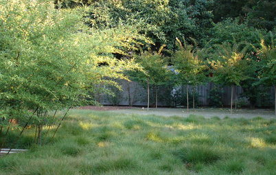 A Guide to the Grasses Available for Nontraditional Lawns
