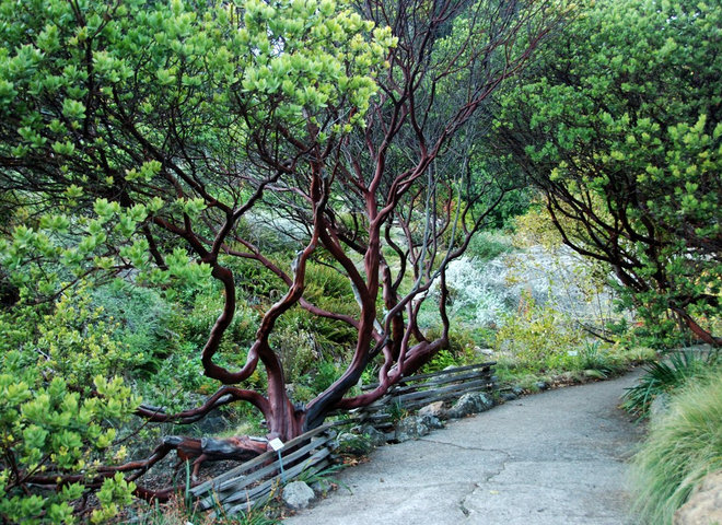 Great Design Plant Parry Manzanita Stands Out In Low