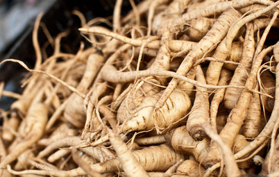 Cool-Season Vegetables: How to Grow Parsnips