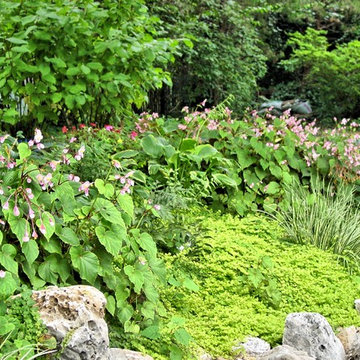 Part Shade Plant Combination