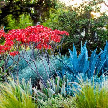 Pasadena Sustainable Planting