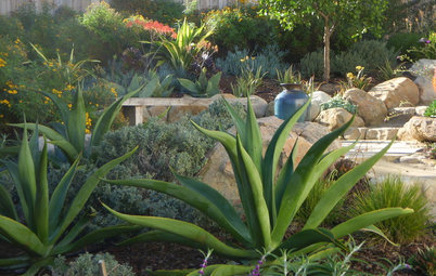 Decorate the Landscape With Versatile Agave