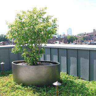ボストンの小さい、夏のモダンスタイルのおしゃれな庭 (ゼリスケープ、日向、コンクリート敷き) の写真