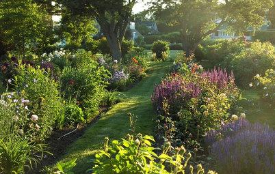 Staudenblüte das ganze Gartenjahr – so gelingt's