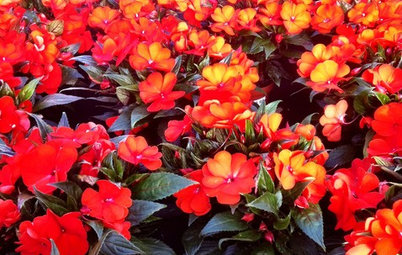 Bright Plants for Flower Beds That Wow