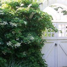Front Yard (shade) Plants