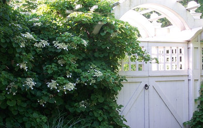 6 Deer-Resistant Flowering Vines to Plant This Fall