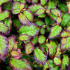7 New Plants to Grow for Beautiful Foliage